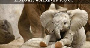 Gentil Éléphant
